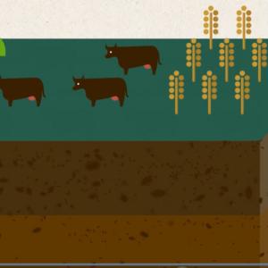 Bodenbiodiversität und Gesundheit