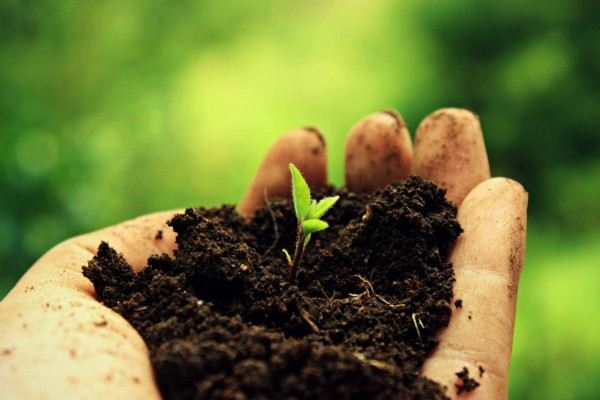 Soil and Land in Sustainable Development Agendas
